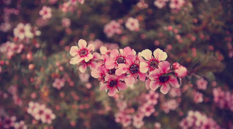Kokmayan Bazı Çiçekler