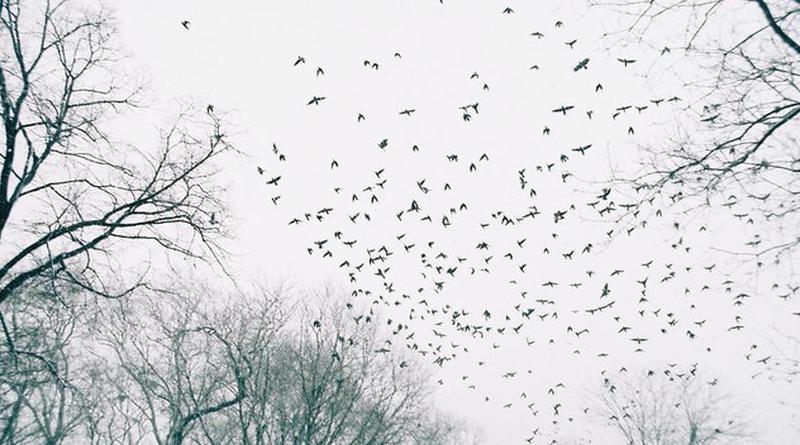 Bazı Kuşlar ve Diğerleri
