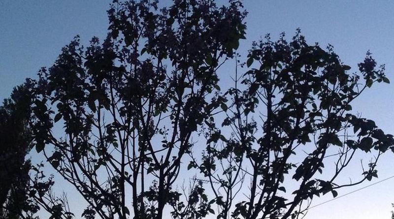 Ağaçlı Bir Şiir Daha