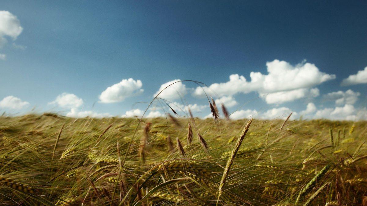 Rüzgarın Sürüklediği Yere Gitme